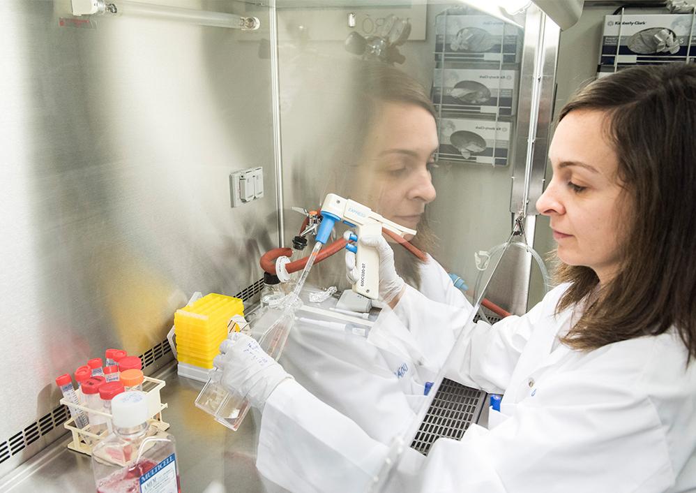 Les résultats in vivo obtenus avec le TH1902 et le TH1904 démontrent une grande accumulation des conjugués à l'intérieur des tumeurs ovariennes et une faible concentration dans les tissus ovariens sains.